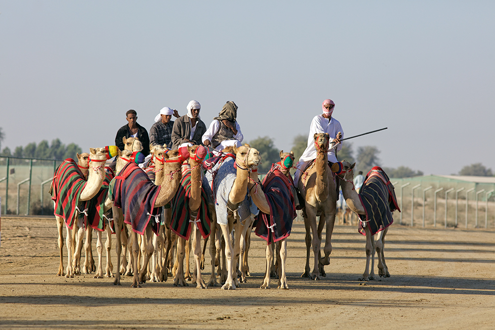 At the camelracetrack, UAE